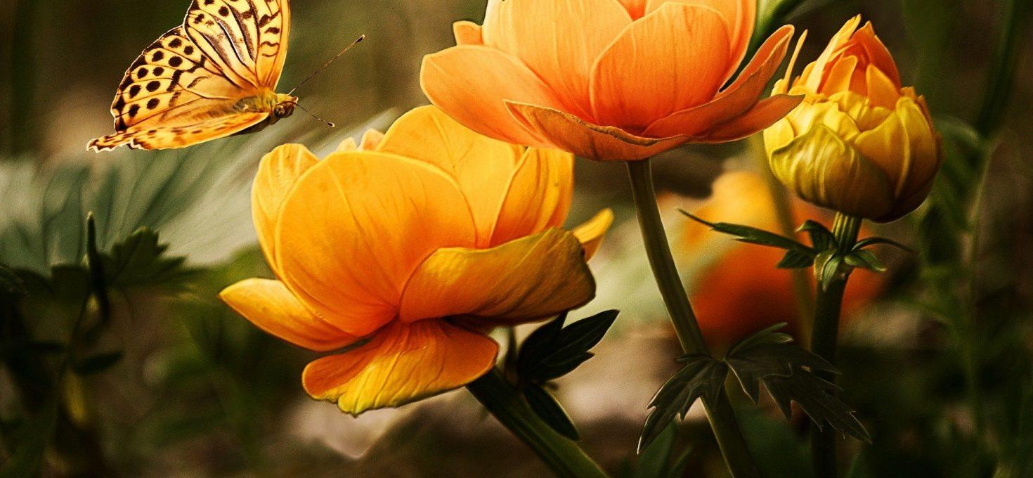 Fleurs du jardin et papillon