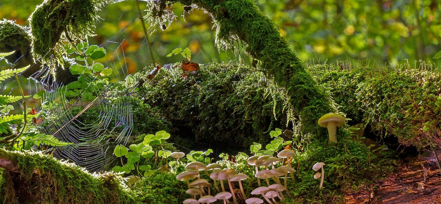 Le charme de la forêt tranquille